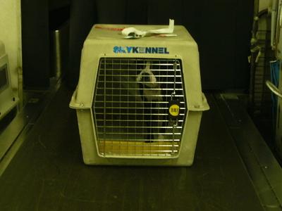 P1040007